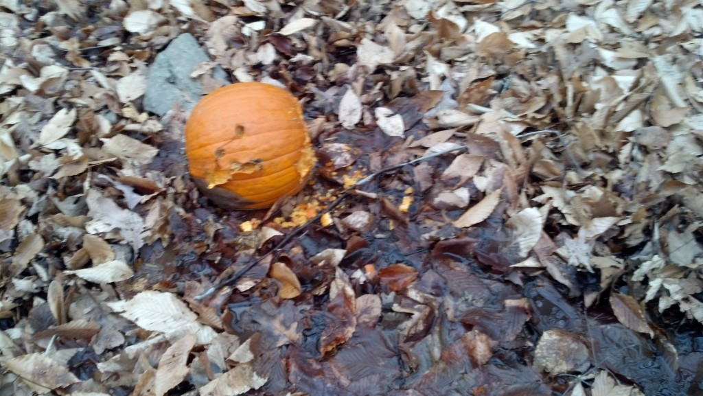 A discarded pumpkin in Soapstone Valley on Dec. 26, 2013.